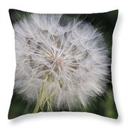 Dandelion Taraxacum Officinale Seed Throw Pillow