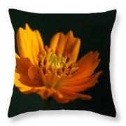 Dappled In The Morning Light Throw Pillow