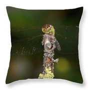 Darter 7 Throw Pillow