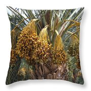 Date Palm In Fruit Throw Pillow