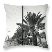Date Palms On A Country Road Throw Pillow