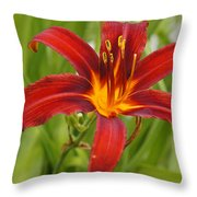 Day Lilly In Diffused Daylight Throw Pillow