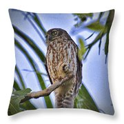 Daylight Shy V2 Throw Pillow
