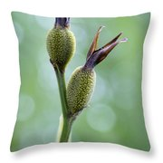 Dazzling Canna Seed Pods Throw Pillow by Kathy Clark
