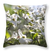 Dazzling Sunlit White Spring Dogwood Blossoms Throw Pillow