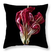 Dead Dried Tulip Throw Pillow