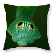 Dead-leaf Moth Oxytenis Modestia Throw Pillow