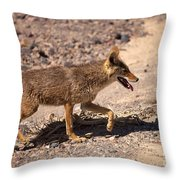 Death Valley Coyote Throw Pillow