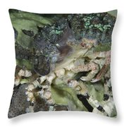 Decorator Crab, Indonesia Throw Pillow