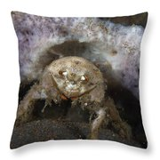 Decorator Crab With Mauve Sponge Throw Pillow