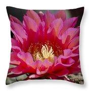 Deep Pink Cactus Flower Throw Pillow