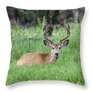 Deer At Rest Throw Pillow