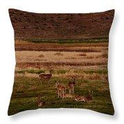 Deer In The Golden Meadow Throw Pillow