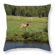 Deer In Tuolumne Meadow Throw Pillow