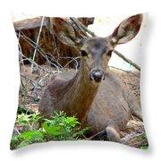 Deer Watching Throw Pillow