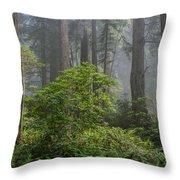 Del Norte Redwoods Throw Pillow