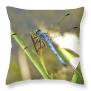 Delicate Dragonfly Throw Pillow