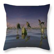 Delta Duck Potato Plants, Sagittaria Throw Pillow
