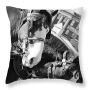 Denver Stock Show Throw Pillow