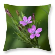 Deptford Pinks Dsmf182 Throw Pillow