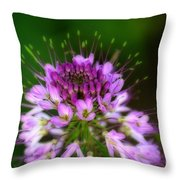 Desert Bloosom Throw Pillow