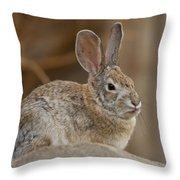 Desert Cottontail Rabbits Throw Pillow