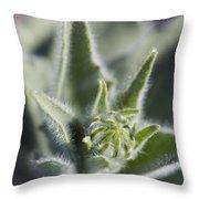 Desert Sunflower Geraea Canescens Bloom Throw Pillow