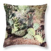 Desert's Collection Of Dried Flowers 3 Throw Pillow