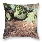 Desert's Collection Of Dried Flowers1 Throw Pillow