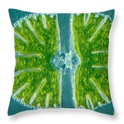 Desmid Algae Throw Pillow