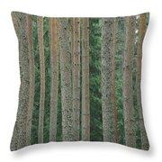 Detail Of Arrow-straight Evergreen Throw Pillow