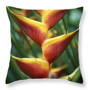 Detail Of Flower From Garden Of The Throw Pillow