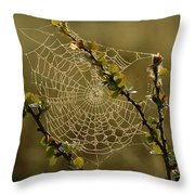 Dew Highlights An Orb-weaver Spiders Throw Pillow