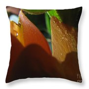Dew Light And Shadows Throw Pillow