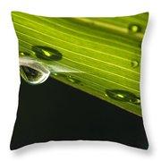 Dew On Leaf, Germany Throw Pillow
