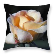 Dew On Rose Throw Pillow