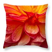 Dewey Dahlia Closeup Throw Pillow