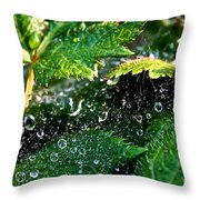 Dewey Web Throw Pillow