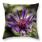 Dewy Purple Fleabane Throw Pillow