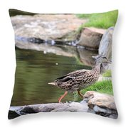 Diary Of A Mad Brown Duck Throw Pillow