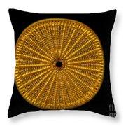 Diatom Alga, Arachnoidiscus Throw Pillow
