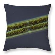 Diatom - Pinnularia Throw Pillow by M. I. Walker