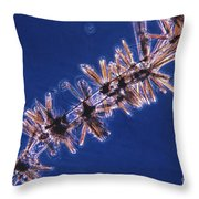 Diatoms Attached To Alga, Lm Throw Pillow by Eric V. Grave