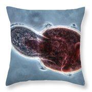 Didinium Nasutum, Ingesting  Paramecium Throw Pillow