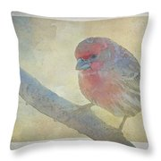 Digitally Painted Finch With Texture II Throw Pillow