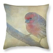 Digitally Painted Finch With Texture IIi Throw Pillow