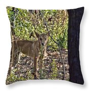 Dingo In The Wild V3 Throw Pillow