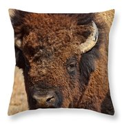 Dirty Nose Throw Pillow