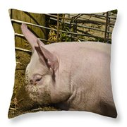 Dirty Piggy Throw Pillow
