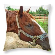 Do I Have Hay On My Nose Throw Pillow